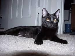 blackcat8