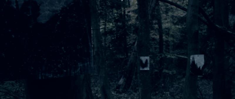 Moth_still_001